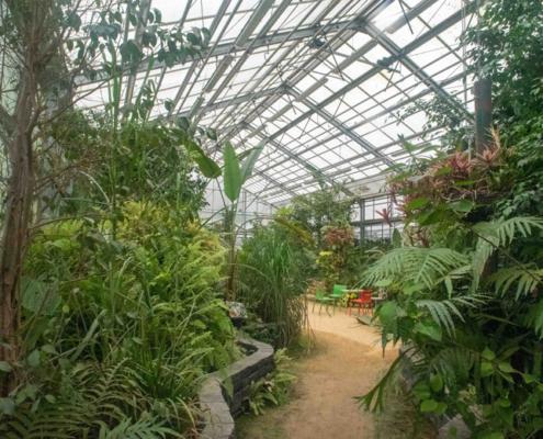 Palmkas kweektuinen